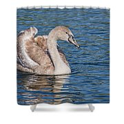 Mute Swan Cygnet Shower Curtain