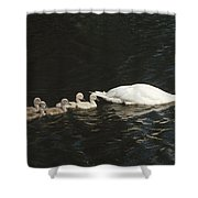 Mute Swan Cygnus Olor Parent Shower Curtain