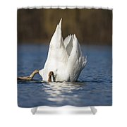 Mute Swan Dabbling Bavaria Shower Curtain