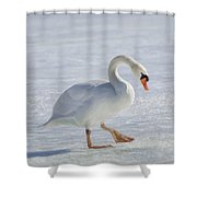 Mute Swan Oil Paint Shower Curtain
