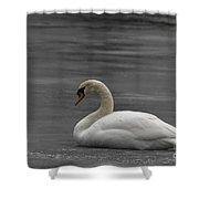 Mute Swan On Ice Shower Curtain