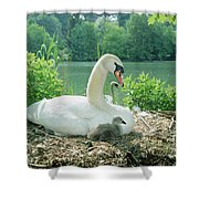 Mute Swan Parent And Chicks On Nest Shower Curtain by Konrad Wothe