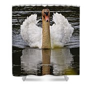Mute Swan Pictures 141 Shower Curtain