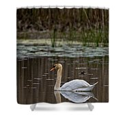 Mute Swan Pictures 143 Shower Curtain