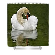 Mute Swan Pictures 191 Shower Curtain