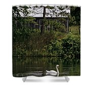 Mute Swan Pictures 199 Shower Curtain