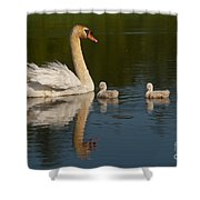 Mute Swan Pictures 244 Shower Curtain