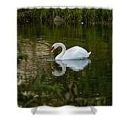 Mute Swan Pictures 85 Shower Curtain