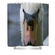Mute Swan Pictures 88 Shower Curtain