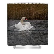 Mute Swan Pictures 97 Shower Curtain