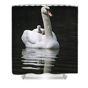 Mute Swan With Chicks On Back Shower Curtain