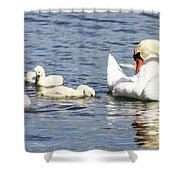 Mute Swans Shower Curtain
