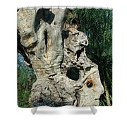 My Best Olive Tree Friend  Home Privat Spain Since 1999 Shower Curtain