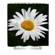 My Daisy Shower Curtain