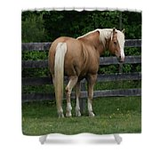 My Dream Horse Shower Curtain