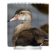 My Feather Friend - Wood Duck Shower Curtain