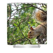 My First American Squirrel Shower Curtain