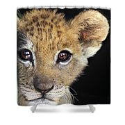 My Grandma What Big Eyes You Have African Lion Cub Wildlife Rescue Shower Curtain