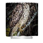 My Hawk Encounter Shower Curtain