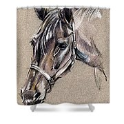 My Horse Portrait Drawing Shower Curtain