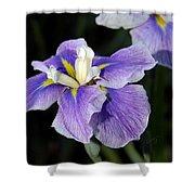 My Iris II Shower Curtain