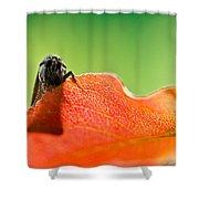 My Leaf Shower Curtain