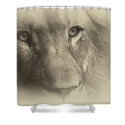 My Lion Eyes In Antique Shower Curtain