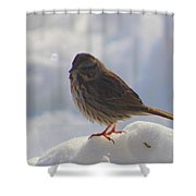 My Little Sparrow Shower Curtain
