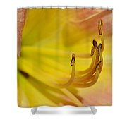 My Name Is Lily Shower Curtain