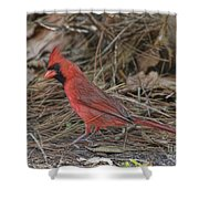 My Name Is Red Shower Curtain by Deborah Benoit