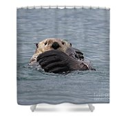 My Otter Shower Curtain