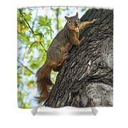My Peanut Shower Curtain by Robert Bales