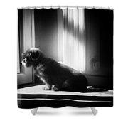 My Thoughtfull Dog Shower Curtain
