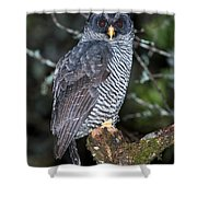 Mysterious Owl Shower Curtain