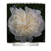 Mysterious White Peony Abstract Painting Shower Curtain