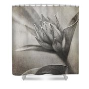 Mystic Anticipation Shower Curtain