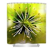 Mystic Hellebores Shower Curtain
