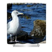 Mystic Seagull Shower Curtain