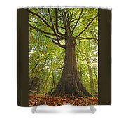 Mystical Forest Tree Shower Curtain
