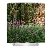 Mystical Woods Shower Curtain