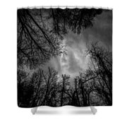 Naked Branches Shower Curtain