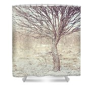 Naked Willow Tree. Winter Poems Shower Curtain