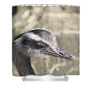Nandu Or Rhea Portrait Shower Curtain