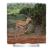 Nanger Granti... Shower Curtain