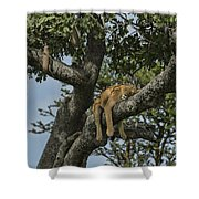 Nap Time On The Serengeti Shower Curtain