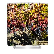 Napa Fall Grapes Shower Curtain