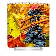 Napa Valley Grapes, California Shower Curtain