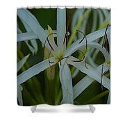 Naples Zoo Shower Curtain