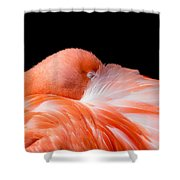 Napping Flamingo Shower Curtain