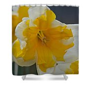 Narcissus 014-1 Shower Curtain